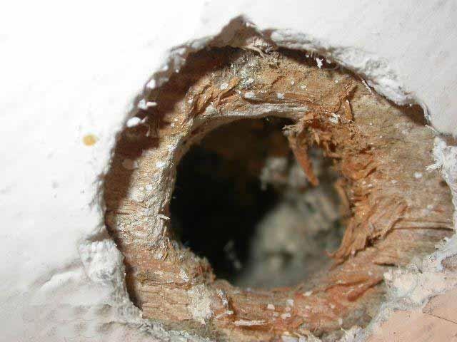 нора мышинная в деревянном доме
