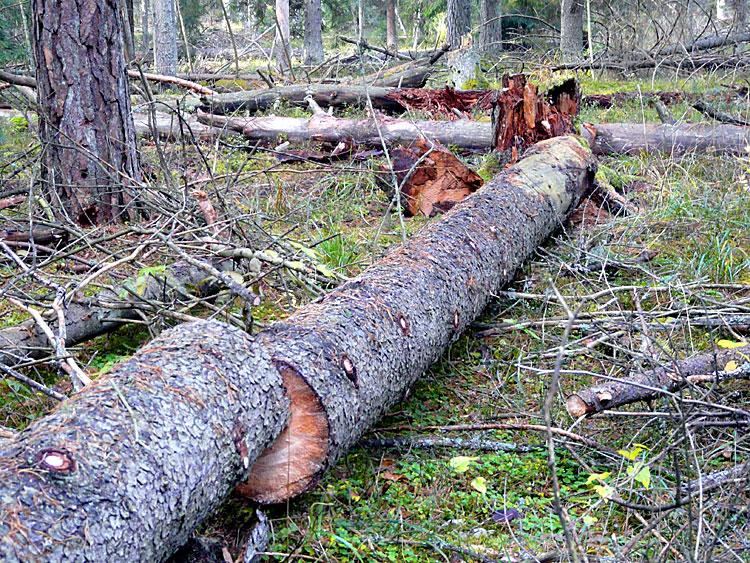 мелкосортная древесина низкого качества