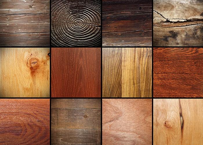 структура различных пород дерева хвойных