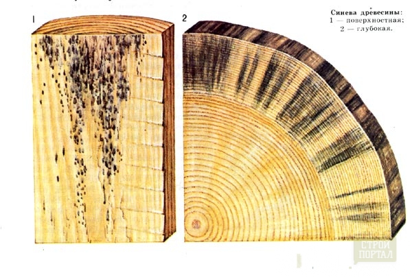 синева древесина