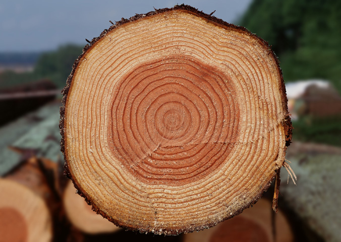 состав древесины фото