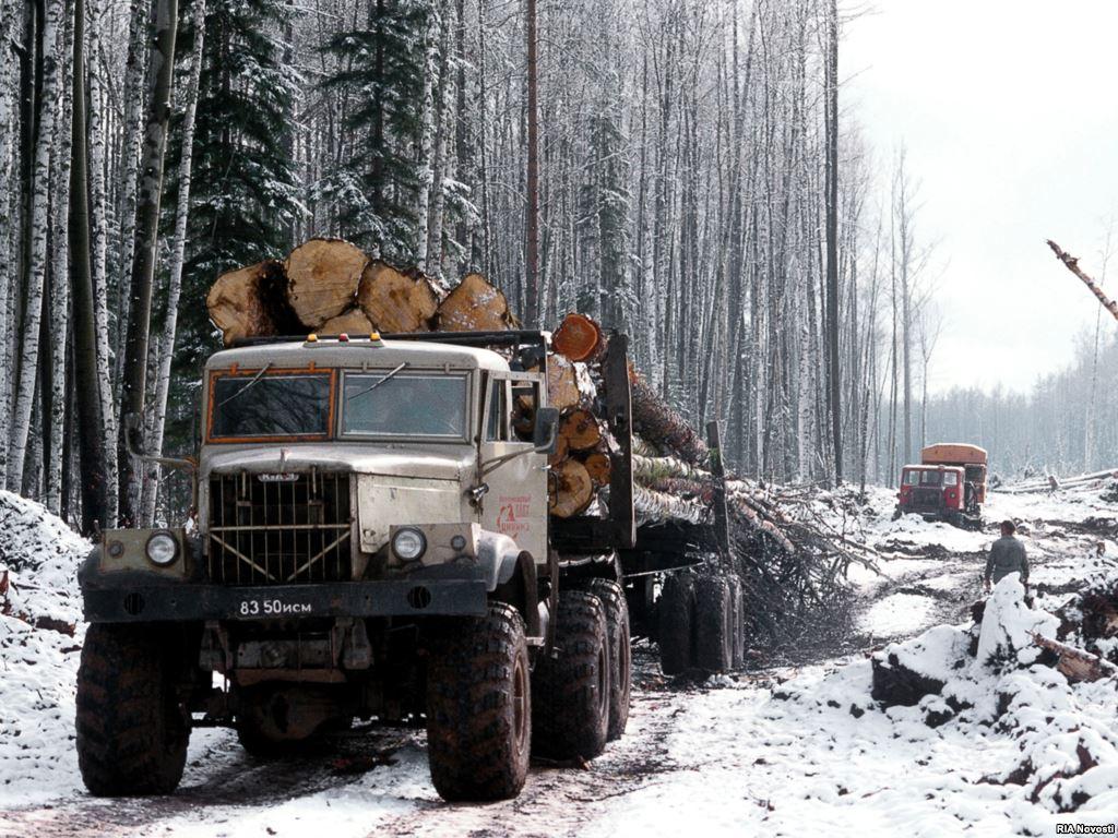 лес зимней валки
